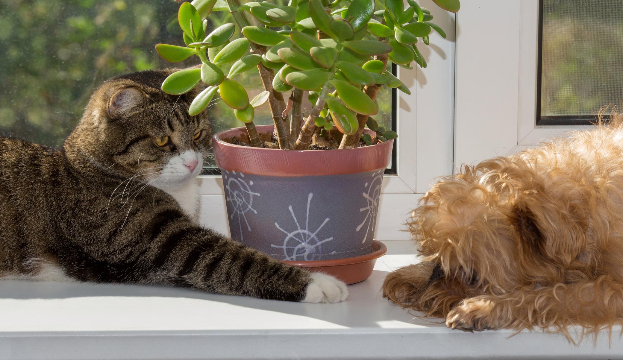Conheça as Flores Perigosas para seu Gato ou Cachorro - Pomelo